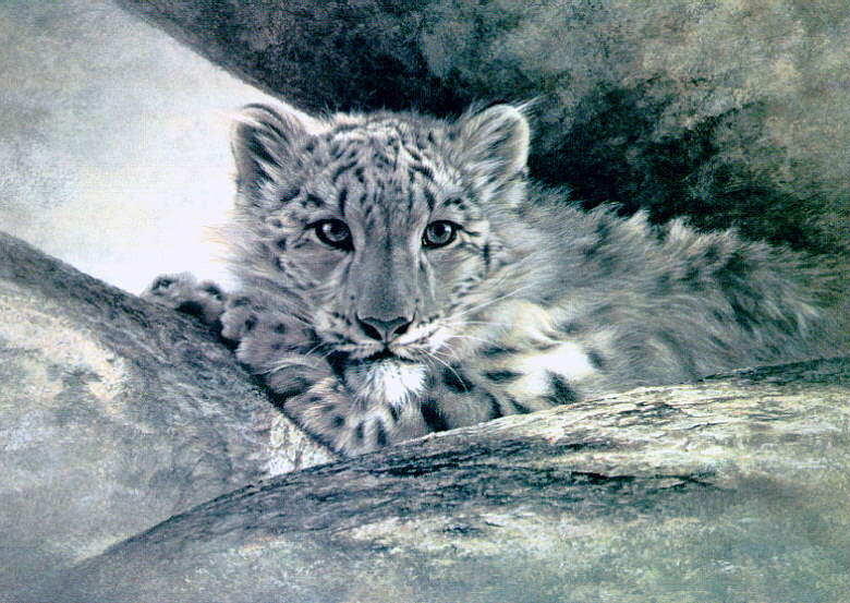 BISMILLAHIRROHMANIRROHIM Snow Leopard Cub In